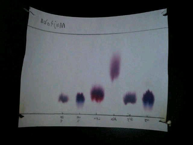 separation of amino acids by paper chromatography-lab report